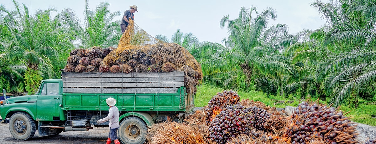 FERRERO'S PALM OIL: TRACEABILITY AND TRANSPARENCY
