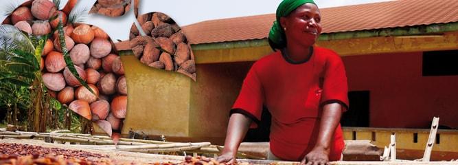 Θέσεις και δεσμεύσεις Ferrero στο βιώσιμο φοινικέλαιο