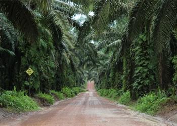 Ferrero palm yağı ilerleme raporu - Kasım 2014