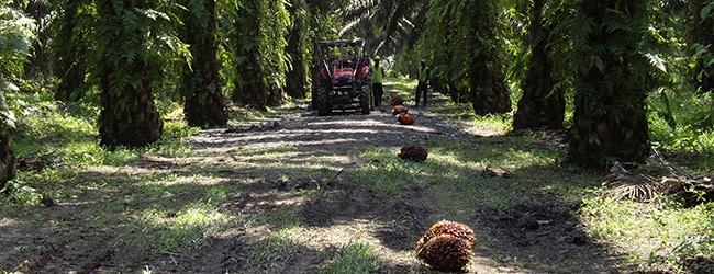 Ferrero's third palm oil progress report