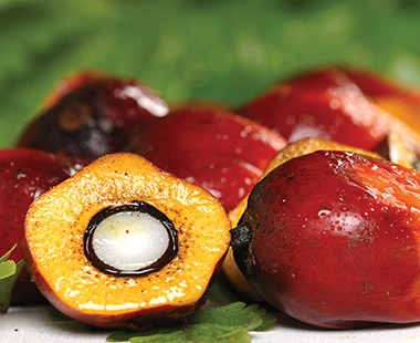 Ferrero joins NGOs and innovative palm oil suppliers