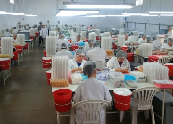 Ferrero statement on child labor allegations in Romania
