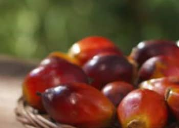 Ferrero's palm oil: health and safety is the first priority