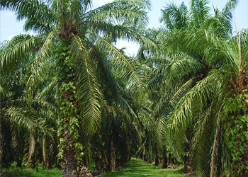 Ferrero's sixth palm oil progress report