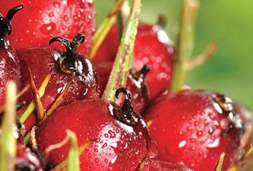 Quinto reporte de Ferrero sobre el progreso del aceite de palma