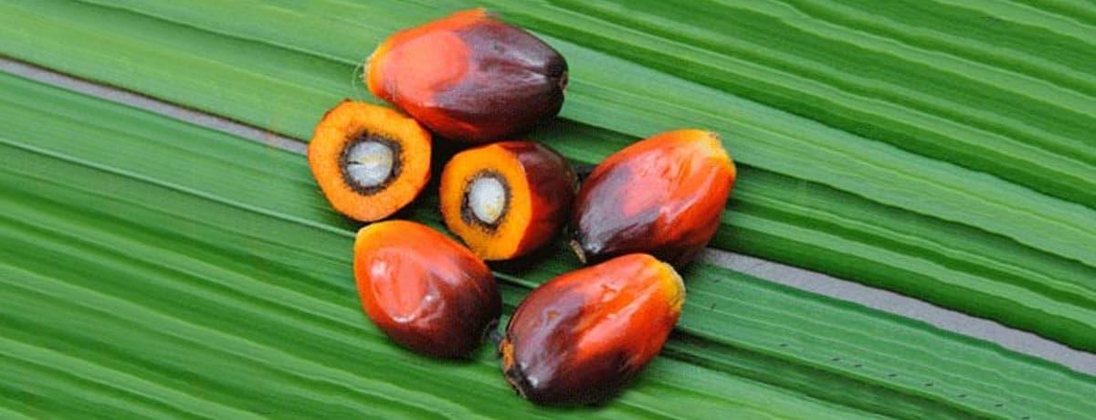 La Palm Oil Charter di Ferrero
