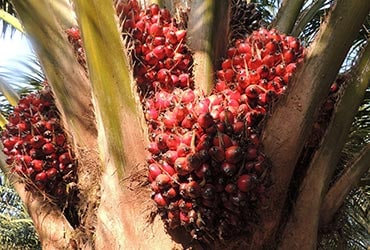 Ferrero è leader del WWF Palm Oil Scorecard 2016