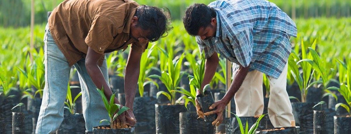 """Ferrero supporta il documento del POIG """"Palm oil innovations: labour rights"""""""