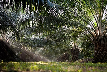 PALM OIL: FERRERO CONTINUING TO TAKE ACTION