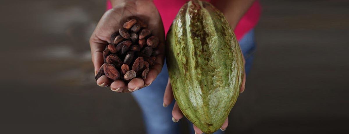 Ferrero behoudt momentum bij het bestrijden van ontbossing in de cacaosector