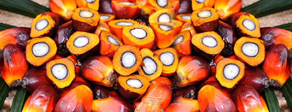 Ferrero's palmolie: traceerbaarheid en transparantie