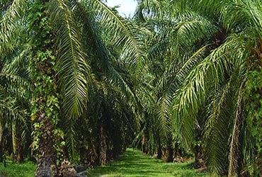 Huile de palme durable : 7e rapport sur les progrès de Ferrero