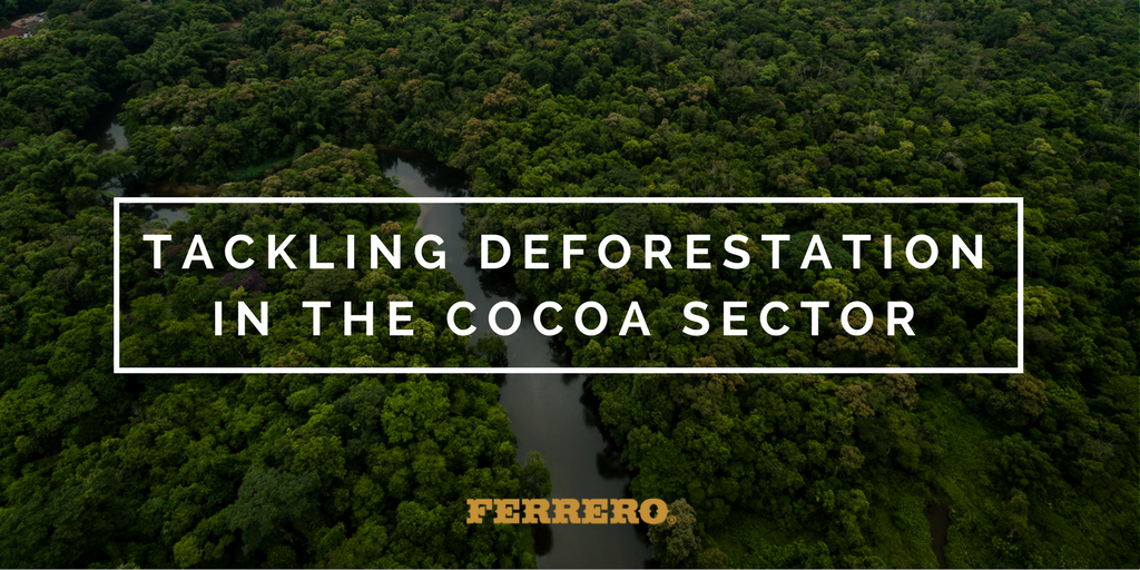 Our commitment to tackle deforestation in the cocoa sector