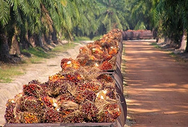Traceability and Transparency for Ferrero's Palm Oil