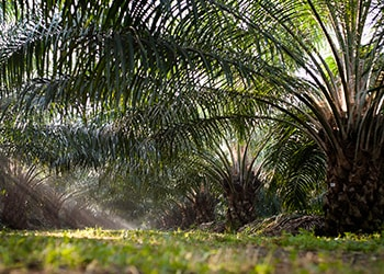 FERRERO'S SEVENTH PALM OIL PROGRESS REPORT