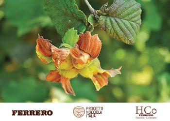 """Ferrero lancia """"Progetto Nocciola Italia"""""""