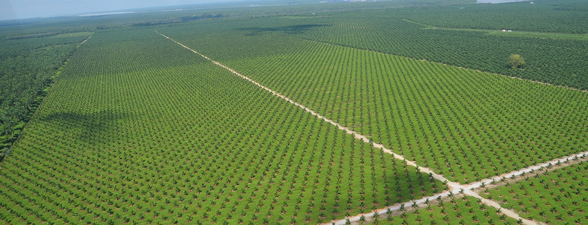 Ferrero's palm oil: transparency back to the mills