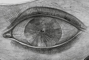 Occhio per occhio. Il primo Novecento tra avanguardie e rivoluzione scientifica