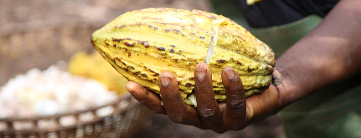 THE COCOA AND FOREST INITIATIVE: FERRERO'S ACTION PLAN