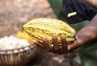Plan de acción de Ferrero para cumplir con el compromiso de la Iniciativa de Cacao y Bosques