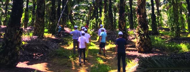 WWF: Olej palmowy FERRERO najbardziej zrównoważony w całej branży