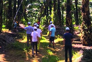 Classifica WWF: l'olio di palma di Ferrero è il più sostenibile del settore