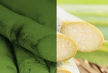 L'approvigionamento sostenibile dello zucchero