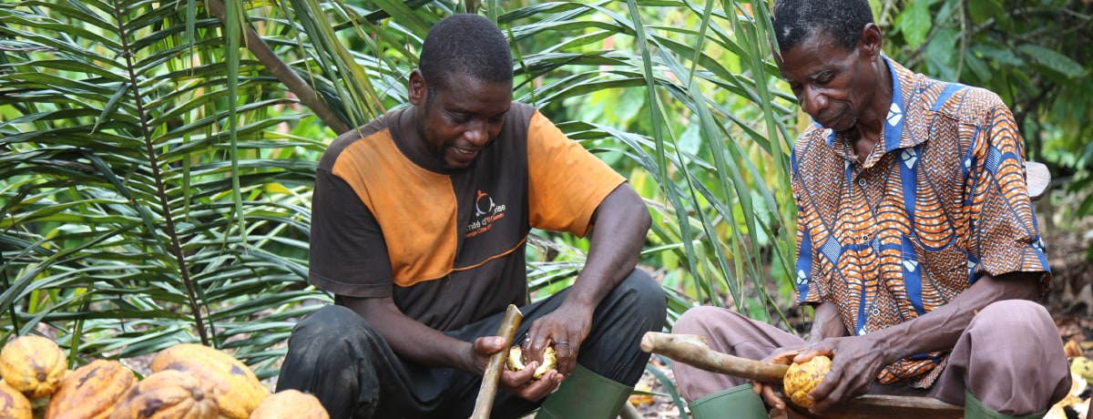 Ferrero makes significant progress in helping end deforestation in cocoa