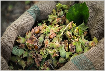 Ferrero is partnering with Earthworm Foundation on its hazelnut responsible sourcing