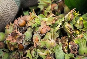 Ferrero e Earthworm Foundation per una filiera responsabile nelle nocciole