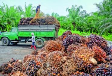 Ferreros Palmöl: Rückverfolgbarkeit und Transparenz