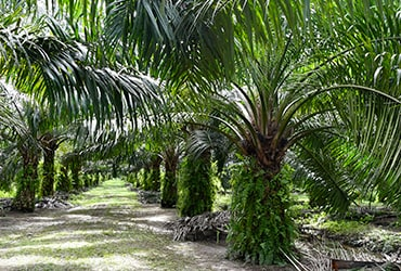 Ferrero's ninth palm oil progress report