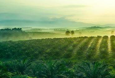 Ferrero's palm oil: supply chain transparency