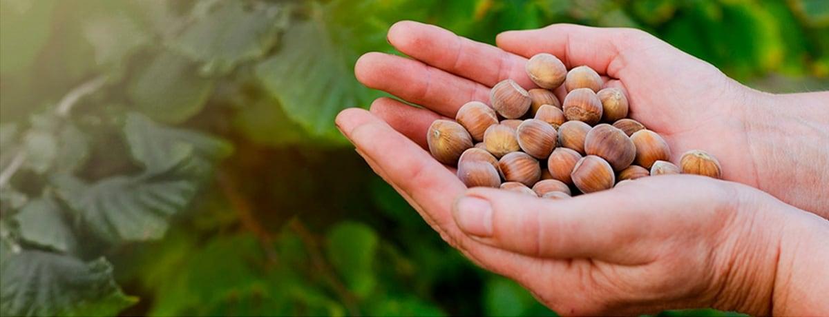 Ferrero Hazelnut Charter per un settore della nocciola che crea valore condiviso