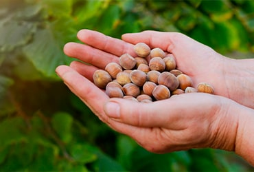 Ferrero's Hazelnut Charter: towards a hazelnut industry that creates value for all