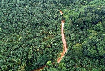 Ferrero commits to 100 percent satellite monitoring of its palm oil supply chain