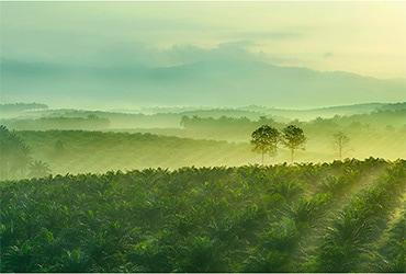 Olio di palma Ferrero: trasparenza della filiera