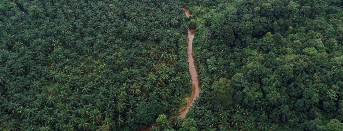 Ferrero se compromete al monitoreo satelital del 100 por ciento de su cadena de suministro de aceite de palma