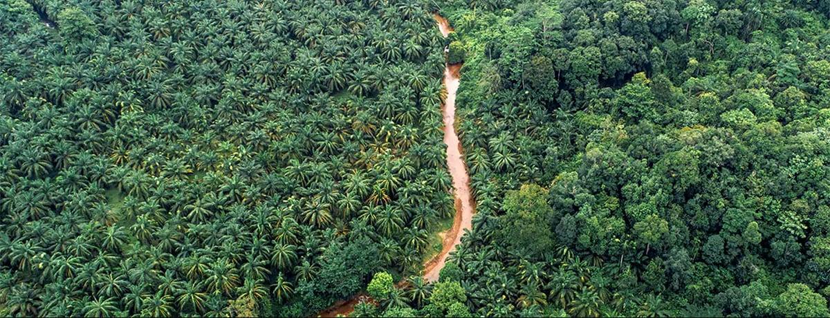 Ferrero: monitoraggio satellitare per controllare le piantagioni di olio di palma
