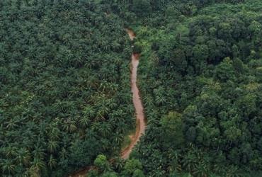 Ferrero se compromete a monitorar via satélite 100 por cento de sua cadeia de abastecimento de óleo de palma