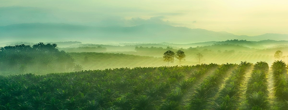 La transparencia de la cadena de suministro del aceite de palma de Ferrero