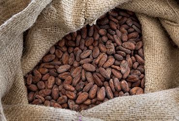 Ferrero continues to scale cocoa sustainability programme