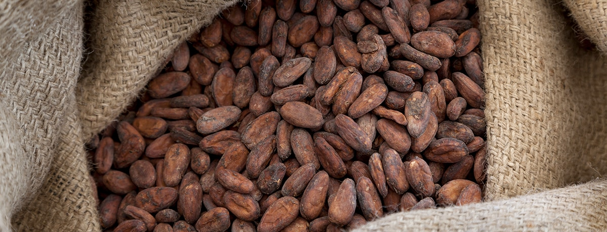 Ferrero continues to scale cocoa sustainability programme