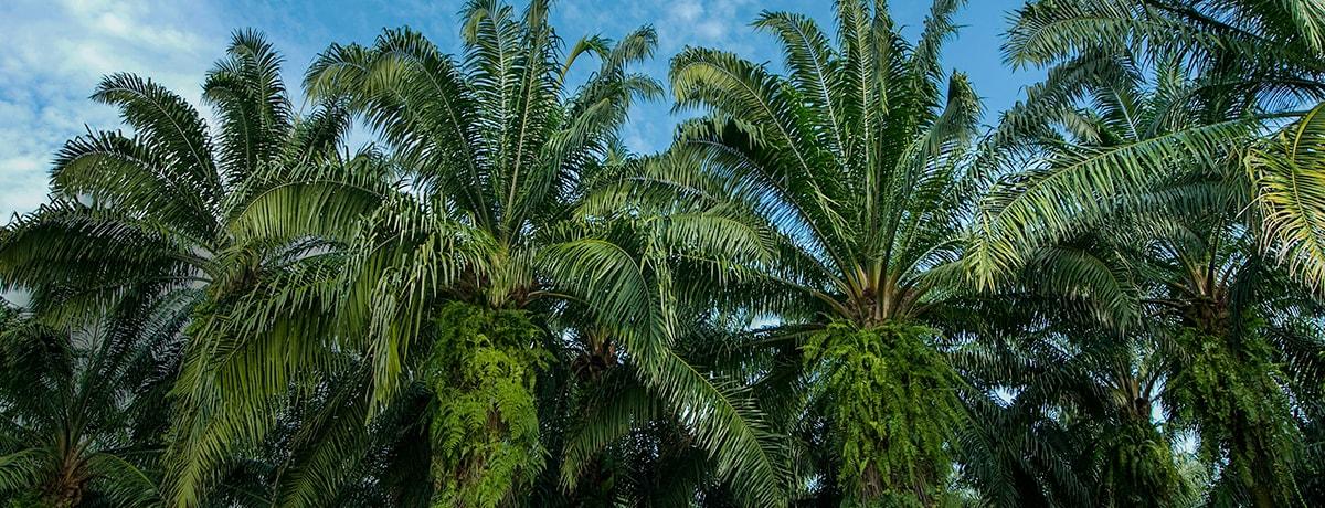 Ferrero's 2020 palm oil progress report