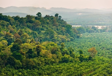 FERRERO UNVEILS ITS NEW PALM OIL CHARTER