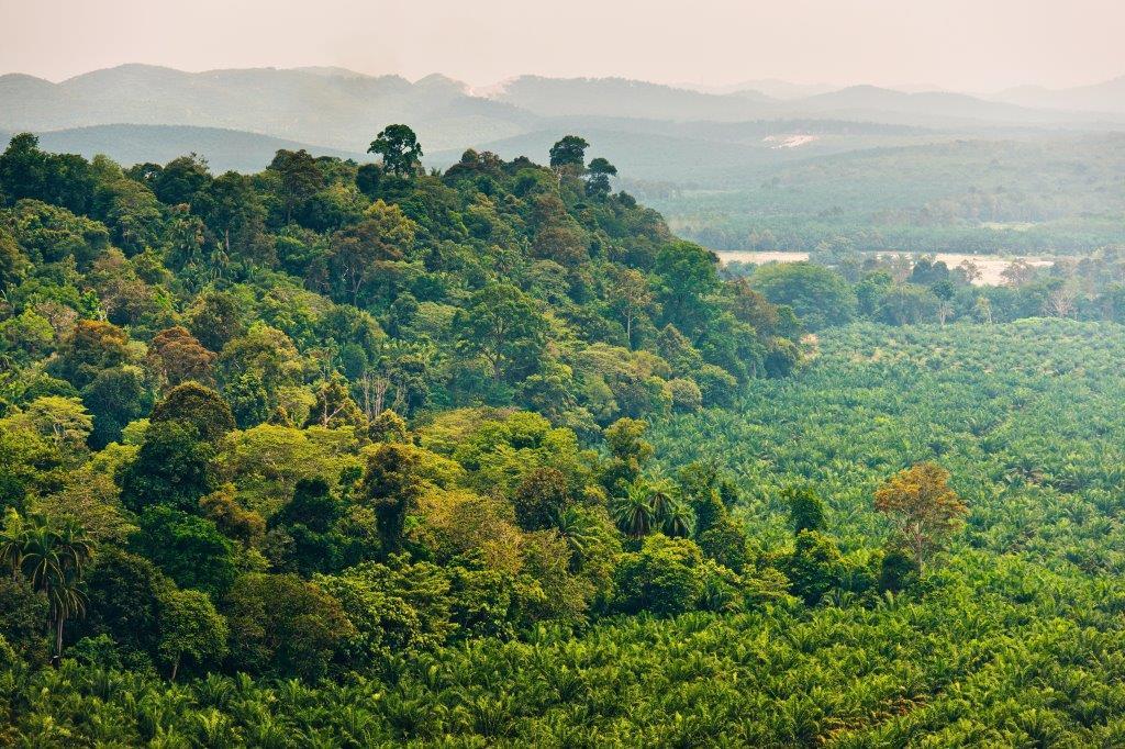 Ferrero подтверждает обязательства в рамках новой Хартии по пальмовому маслу