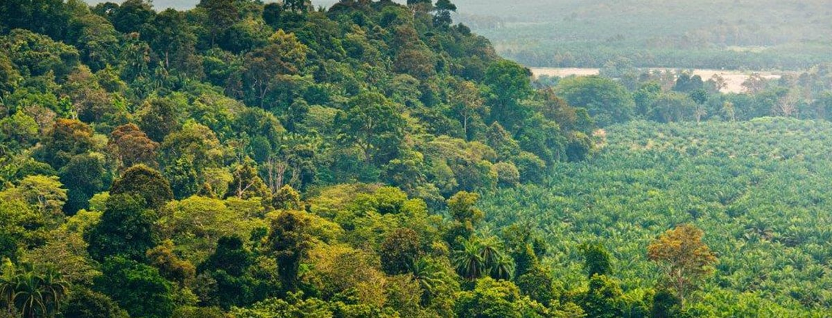 """FERRERO REAFFIRMS ITS COMMITMENT TO SOURCE PALM OIL RESPONSIBLY THROUGH ITS NEW """"PALM OIL CHARTER"""""""
