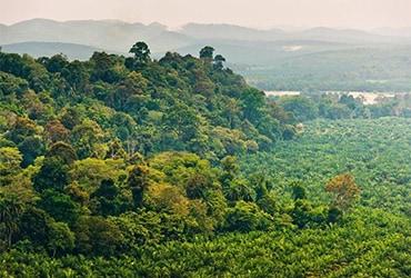 Una nuova Palm Oil charter per una filiera responsabile dell'olio di palma