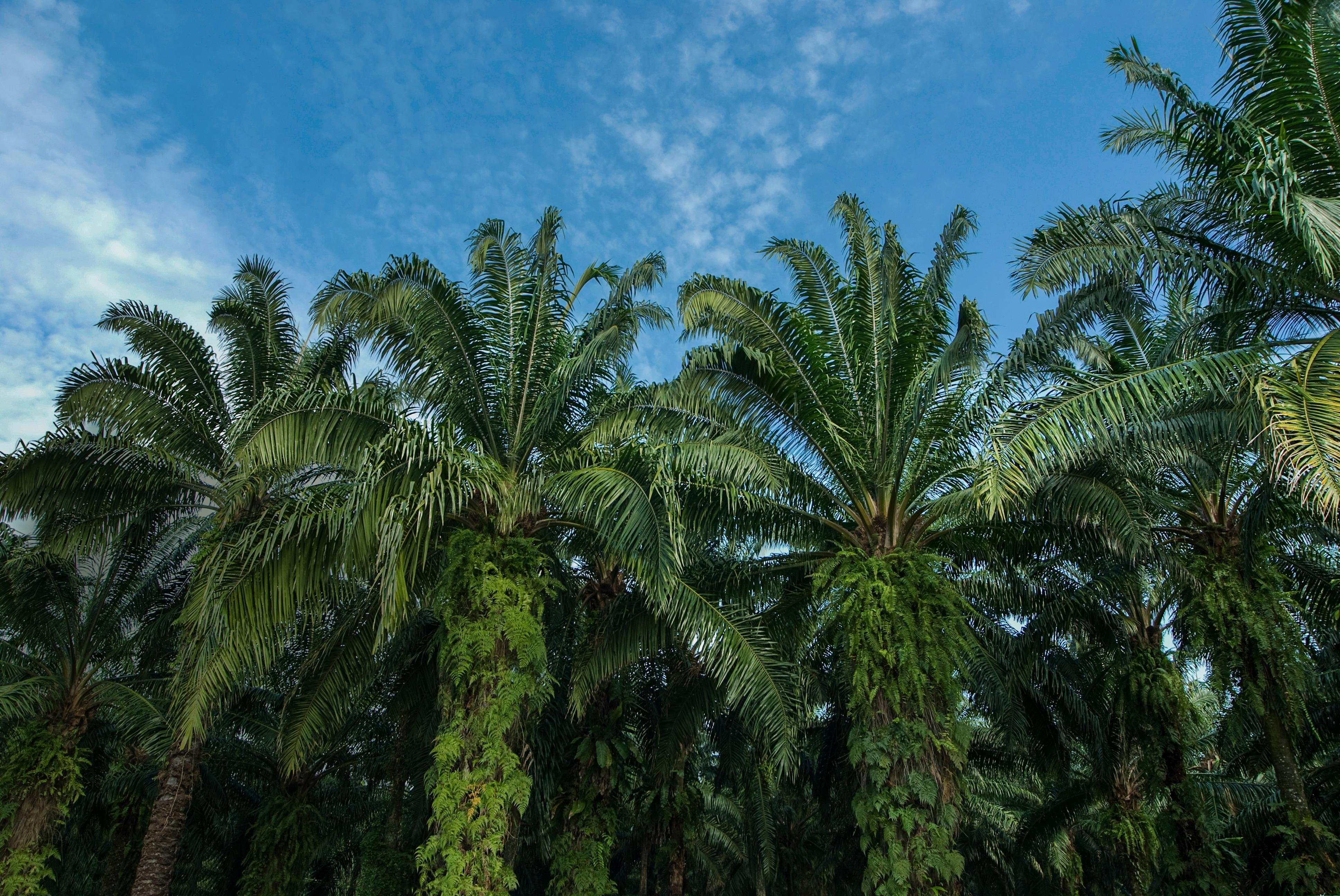 LE WWF RECONNAÎT L'APPROCHE DE FERRERO EN MATIÈRE D'APPROVISIONNEMENT RESPONSABLE EN HUILE DE PALME