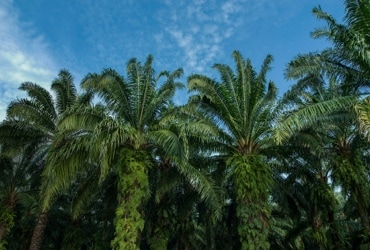 WWF recognizes Ferrero's leading approach to responsible Palm Oil sourcing
